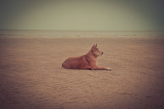 Dog beach Royalty Free Stock Images