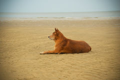 Dog beach Stock Images