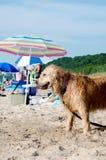 Dog beach in Michigan royalty free stock photos