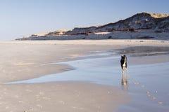 Dog on a Beach Stock Image
