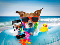 Dog at the beach and ocean with air mattress Stock Images