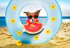 Dog at the beach and ocean with air mattress Stock Photo