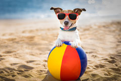 Dog at the beach and ocean with plastic ball Royalty Free Stock Images