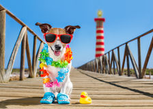 Dog at the beach and ocean with plastic duck Stock Photo