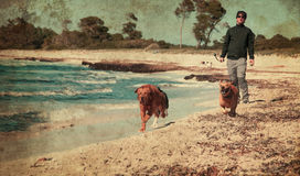 Dog and beach Royalty Free Stock Images