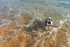 Dog at the beach Stock Image
