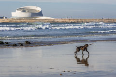 Dog on the beach. In Porto city, Portugal royalty free stock photo