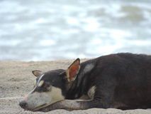 Dog on the beach royalty free stock images