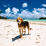 Dog at beach Royalty Free Stock Photography