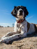 Dog on the Beach. During  summer holiday Royalty Free Stock Image