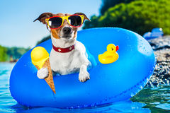Dog beach summer vacation Royalty Free Stock Image
