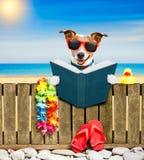 Dog  on  beach on summer vacation holidays Royalty Free Stock Image