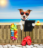Dog on beach on summer vacation holidays stock images