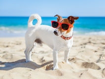 Dog at beach Stock Images