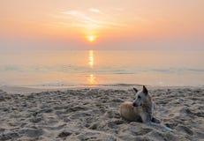 Dog on the beach at sunrise Stock Image