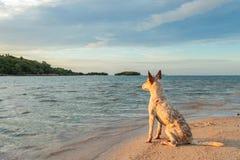 Dog on the beach. With sunrise time Stock Photos