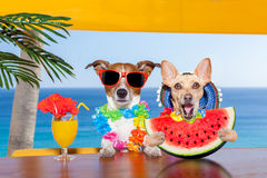 Dog at the beach and watermelon royalty free stock photography