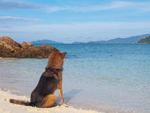 A Dog on the beach. A wet brown dog on the beach Stock Image