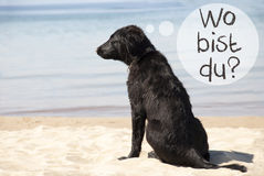 Dog, Beach, Wo Bist Du Means Where Are You Stock Image