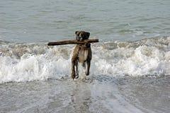 Dog on the beach2 Stock Photo