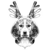 Dog Beagle head. Dog head breed the Beagle on the head Christmas headband with horns deer sketch vector graphics black and white drawing Royalty Free Stock Images