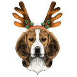 Dog Beagle head. Dog head breed the Beagle on the head Christmas headband with horns deer sketch vector graphics color picture Royalty Free Stock Images