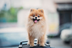 A dog Royalty Free Stock Images