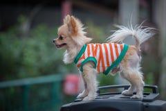 A dog Stock Photos