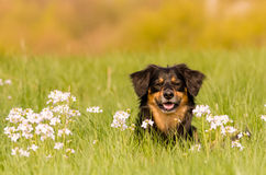 Dog. A beautiful dog in the landscape Royalty Free Stock Photo