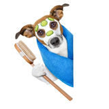 Dog with a beauty mask. Beside a blank banner Stock Photography