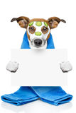 Dog with a beauty mask Royalty Free Stock Photo