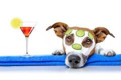 Dog with a beauty mask wellness spa Stock Photos