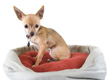 Dog bed Stock Photography