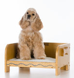 Dog on a bed Stock Photo