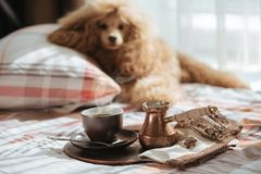 Dog on the bed at home and coffee into a cup on a tray. Breakfast in bed. Dog on the bed at home and coffee into a cup on a tray stock photos