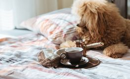 Dog on the bed at home and coffee into a cup on a tray. Breakfast in bed. Dog on the bed at home and coffee into a cup on a tray stock photo