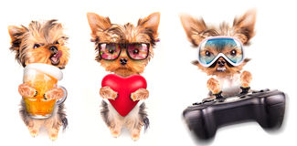 Dog with beer, game pad and lover Royalty Free Stock Image