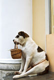 Dog beggar. In the photo Stock Photography