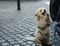 A Dog Begging for Food in the Streets of Rome.