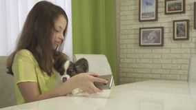 Dog begs attention to himself, not to smartphone stock footage video. Dog begs attention to himself, not to the smartphone stock footage video stock video