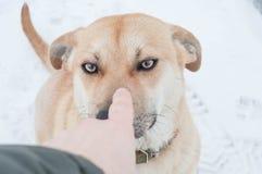 Dog behavior in winter outside stock image