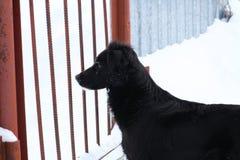 Dog behind bars Stock Photos