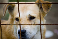 Dog behind bars  Stock Images