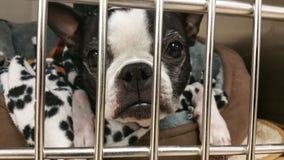 Dog behind bars Stock Photography