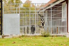 Dog behind bars Royalty Free Stock Images