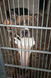 Dog behind bars. A dog in a dungeon at pound Stock Photos