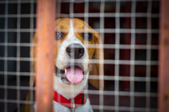 Dog behind the cage Stock Photos