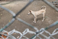 Dog behind cage  in Foundation Stock Images