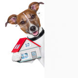 Banner dog home and key Royalty Free Stock Photo