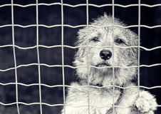 Dog behind a fence stock photos